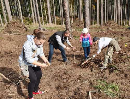 Rok 2019 plný nově vysazených stromů (Česká republika)