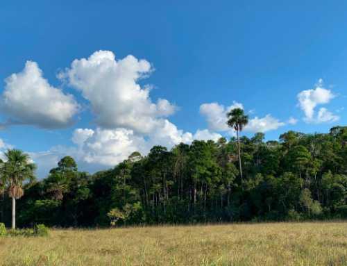 Chráníme nativní les Chaparralito v El Morichalu ve Vichadě (Kolumbie)