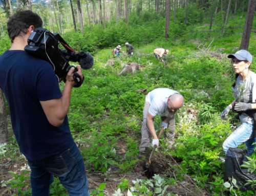 "Planting with ""Treeman"" (Czech Republic)"