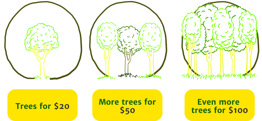 MY TREES - Donations Trees